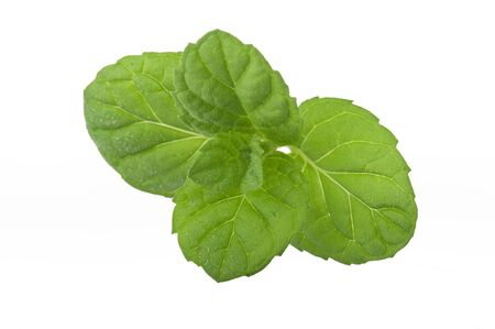 balm: fresh mint leaves on a white background