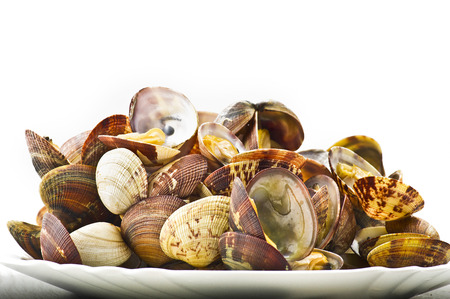 Fresh Clam cooked close up on white Stock Photo