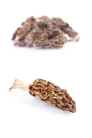 Fresh Wild Morel Mushrooms with white background photo