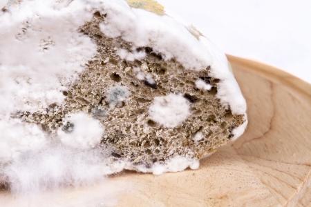 perishable: Moldy bread on a board
