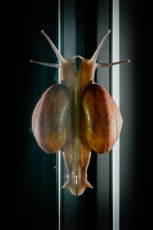 snail with mirror Stock Photo