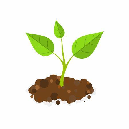 地面で発芽します。