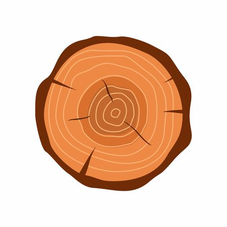 Cross section of tree stump in flat style isolated on white background. Tree trunk cross section natural cut wood slice circle timber ring. illustration