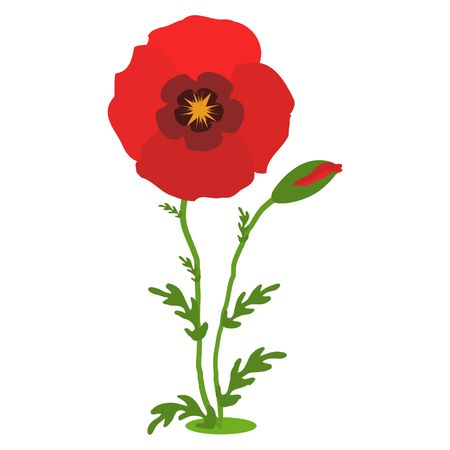 Poppy flowers. Red poppies with stems on white background. Vector Illustration