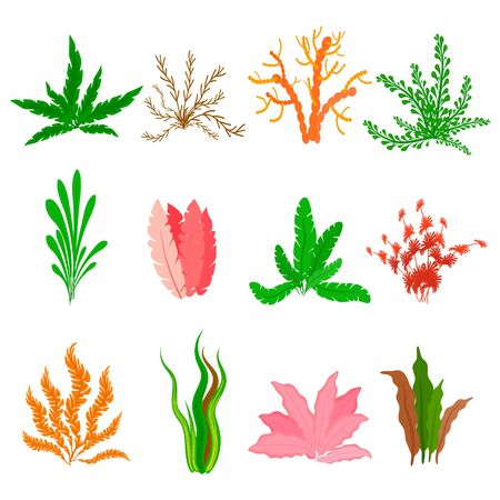 Underwater seaweed vector set on white background. Sea plants and aquatic marine algae. Collection of types aquarium seaweeds. Vector illustration