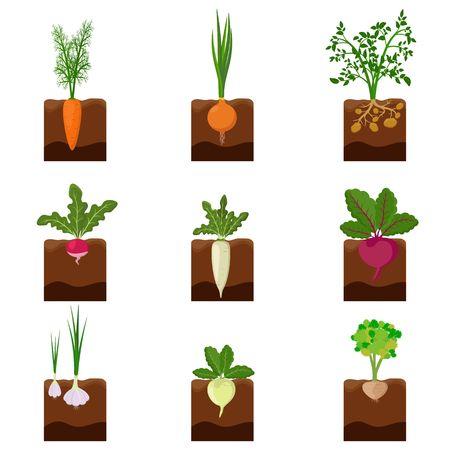 Satz verschiedene Gemüsepflanzen, die unter der Erde wachsen: Karotten, Zwiebeln, Kartoffeln, Radieschen, Daikon, Rüben, Knoblauch, Sellerie. Wurzelgemüse im Bodengarten gepflanzt. Erntevektorillustration