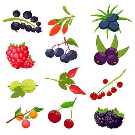 Set berries isolated on white background: currant, cherry, raspberries, rowan, gooseberry, dogrose, blackberry, goji, juniper. Vector illustration