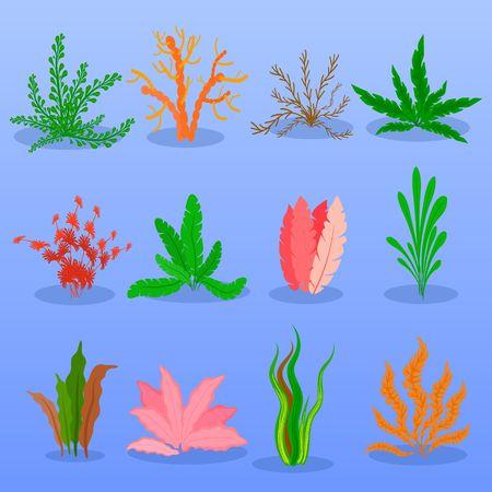 Underwater seaweed vector set on blue background. Sea plants and aquatic marine algae. Collection of types aquarium seaweeds. Vector illustration