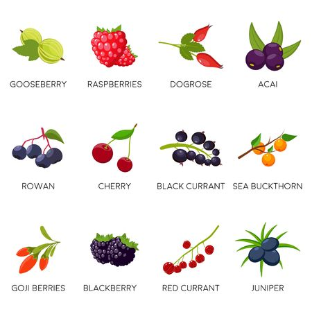 Set berries isolated on white background: currant, cherry, raspberries, rowan, gooseberry, dogrose, blackberry goji juniper. Natural organic berries. Vector illustration Ilustracja