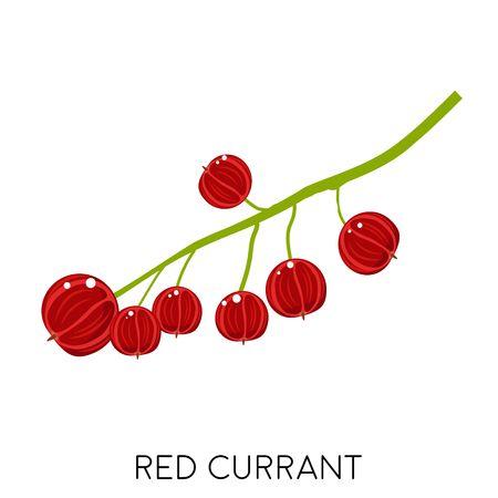 Flache Ikone der roten Johannisbeerebeere lokalisiert auf weißem Hintergrund. Süße Frucht. Öko leckeres Sommeressen. Vektor-Illustration