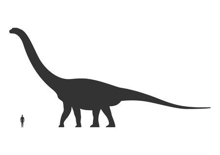 Comparison of human and dinosaur sizes isolated on white background. Argentinosaurus or Brachiosaurus silhouette black. Vector illustration