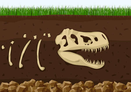 Dinosaur fossil skeleton in soil layers, Dinosaurs reptile skull . Archeology buried bones, ancient extinct prehistory. History of life on Earth concept. Paleontology science background. Vector