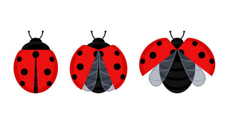Cute red ladybug beetle insect set on a leaf or flying isolated on white background. Vector illustration