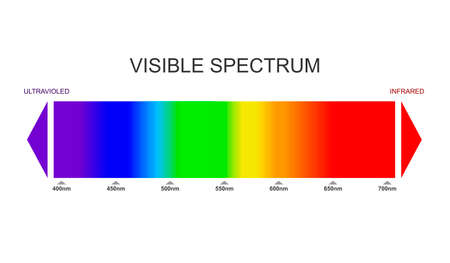 Spectrum, visible light diagram. Portion of the electromagnetic spectrum that is visible to the human eye. Color electromagnetic spectrum, light wave frequency. Infrared and ultraviolet. Vector Vector Illustratie