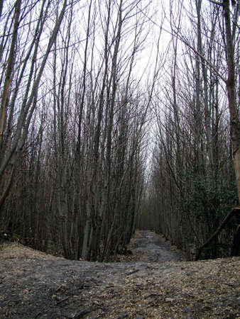 trees in forest photo
