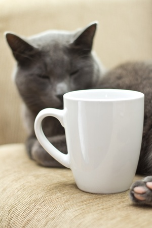 Gray cat on a sofa with white cup photo