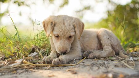 Sad little one puppy sitting starved with green plants in the background.