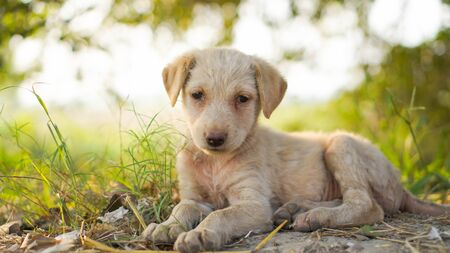 Front view of a small cute puppy starved with a beautiful green background.