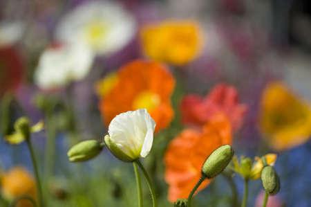 meran: colorful flowers at Meran in springtime