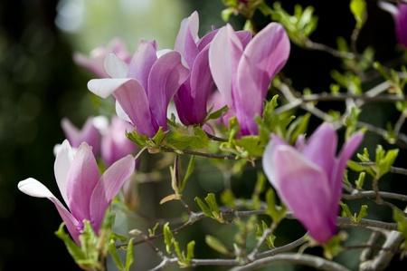 meran: colorful flower at Meran in springtime