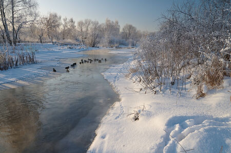 Scene with ducks on the river in winter photo