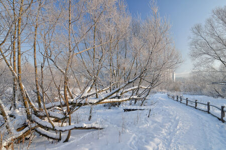 clear path: Winter scene in the park with hoar frosted trees Stock Photo