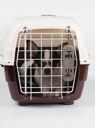 One Chihuahua dog inside closed pet carrier photo