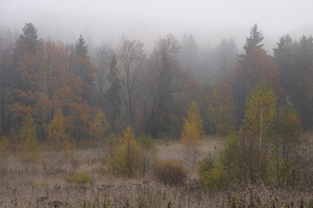 Wet and misty morning in October. Abramtsevo, Russia. photo
