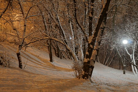 Snowy winter night in the park in Moscow photo