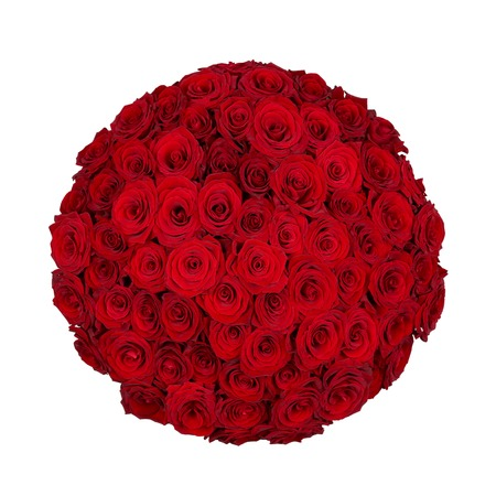 Seventy one red roses isolated on white