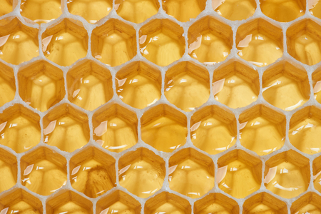 honey cell: Macro of backlit honeycomb with natural raw honey