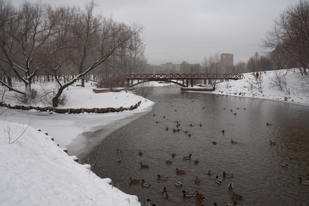 Ducks swim in the river on a gloomy winter day Stock Photo