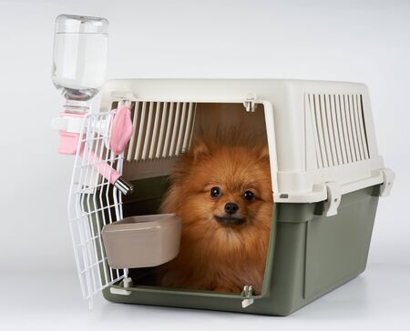 long range: Pet carrier with feeding and watering supply for red Pomeranian spitz ready for long range transportation.