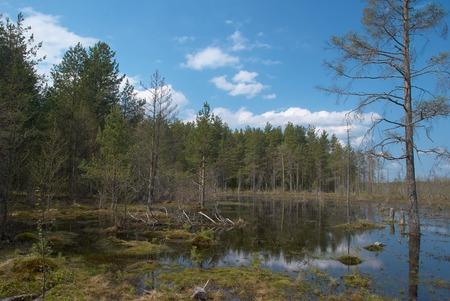 Marécage et forêt près de la ville de Peno, oblast de Tver, Russie Banque d'images - 78474451