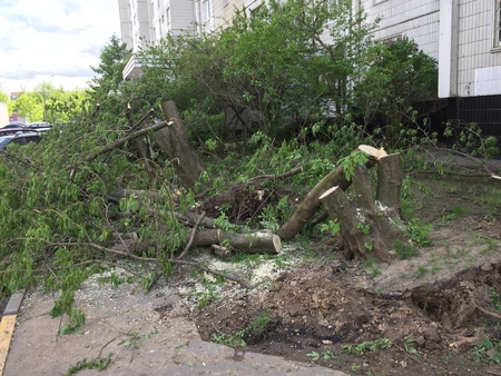 Moscow, Russia - May 30, 2017: Aftermath of the hurricane in Moscow. Authorities started to cut fallen trees in Babushkinskiy district, Moscow.