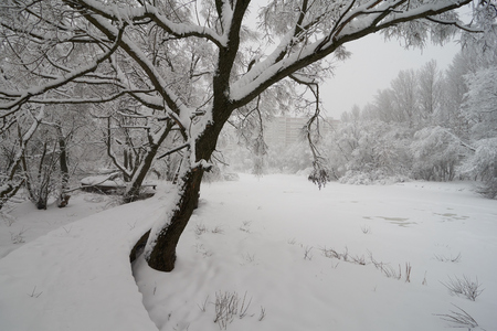 Winter pond and walkway in Moscow after snowfall, Medvedkovo district