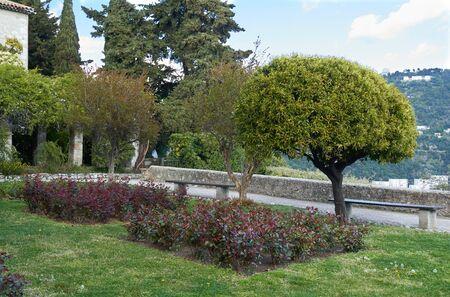 Beautiful small trees in the Monastere de Cimiez Garden in Nice, France.
