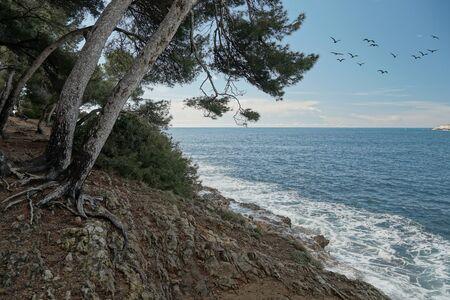 Seascape on the coast of Saint-Jean-Cap-Ferrat in French Riviera. Group of birds flying in the sky. Standard-Bild