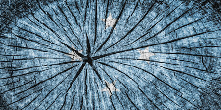 cross section of tree: Flag of the Federated States of Micronesia on cracked wooden texture Stock Photo