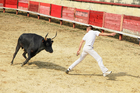 LAUDUN, FRANCE - JULY 13, 2013: Furious bull  and a raseteur during Course camarguaise - the French version of bullfighting on July 13, 2013 in Laudun, France Editorial