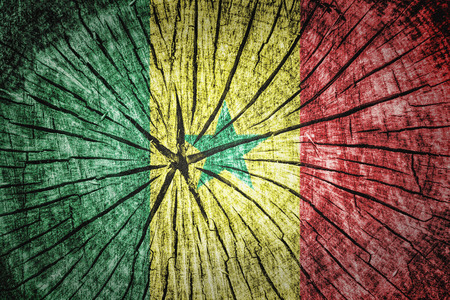 wood cross section: flag of Senegal on cracked wooden texture Stock Photo