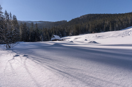glade: Mountain glade in winter scenery