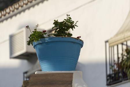 Blue flower pot.