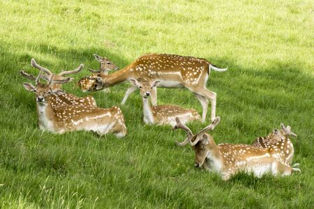 A herd of deer in the clearing. Stock Photo