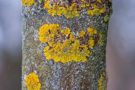 Close up tree trunk covered with yellow lichen and fungus
