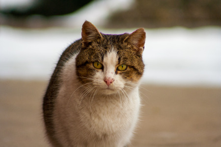 A cat with beautiful eyes standing on concrete in winter Stock Photo