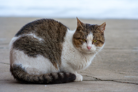 close up cat with yellow eyes lying on concrete in winter
