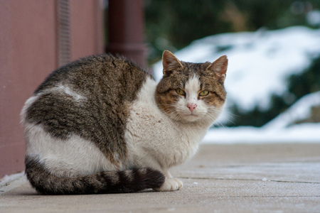the cat who has yellow eyes is sitting on the concrete Stock Photo