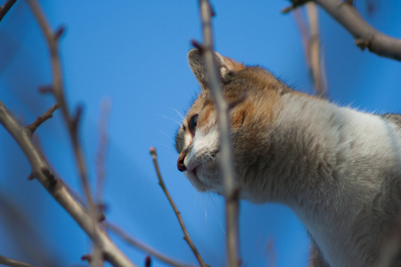 cat sitting on a tree branch Stock Photo