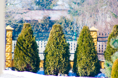 conifer trees next to the fence 写真素材